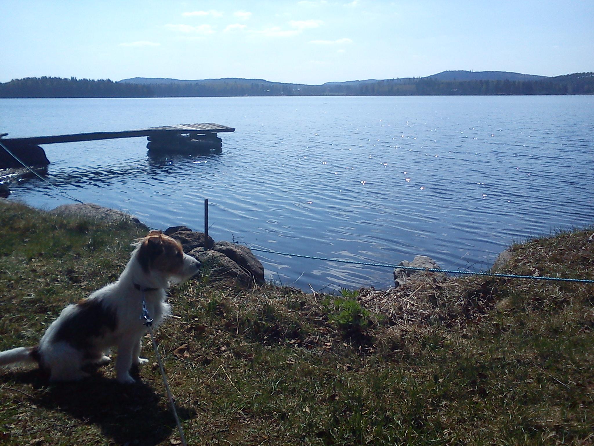 Att vara på landet med min hund