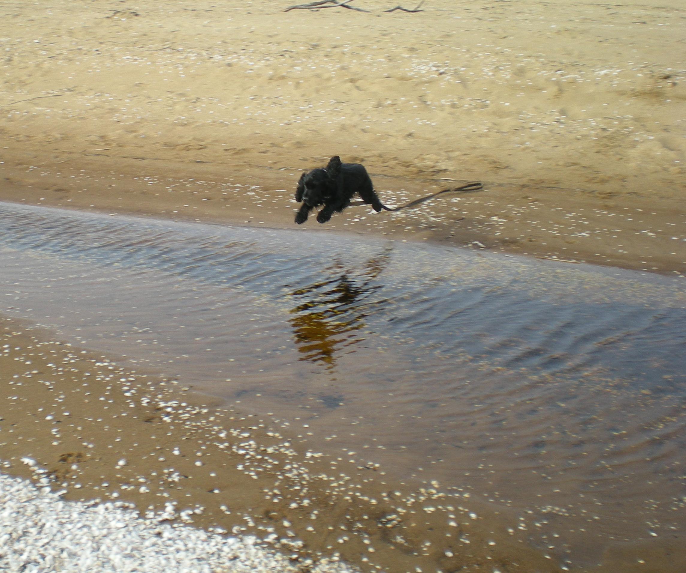 kolla dräktighet hund