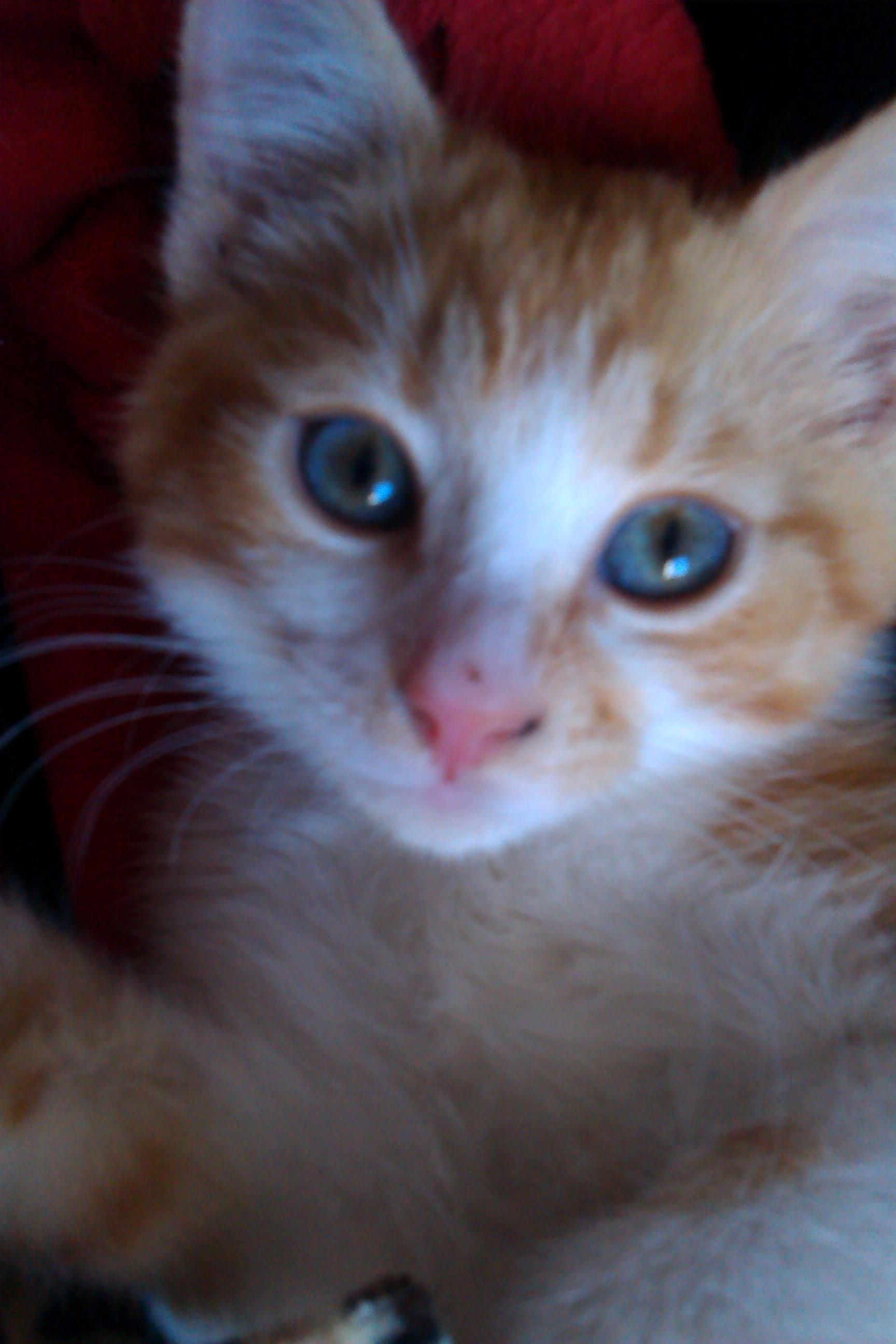 När byter kattungar ögonfärg
