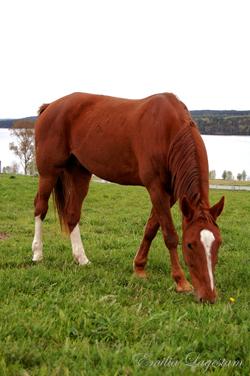 avmaskning häst hur ofta