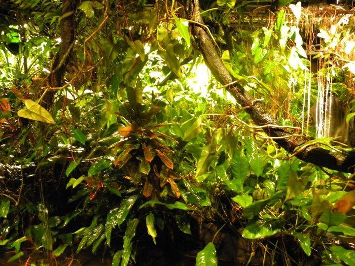 Växterna i rengnskogen bildar nästan som en djungel.