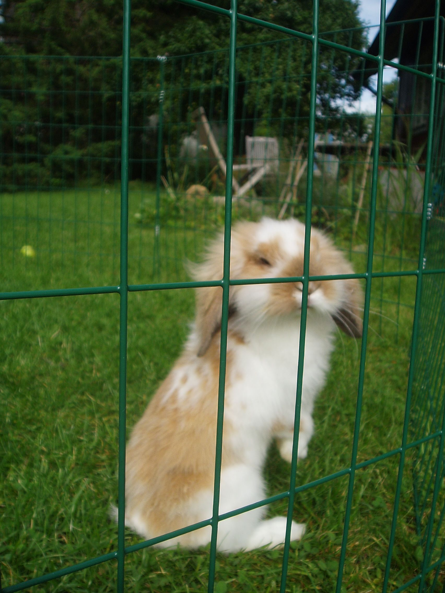 kanin skrämma