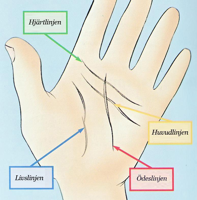 Livslinjer i hand - Tarot och spådomskonst - Häxor iFokus 5f6f7807e6f29