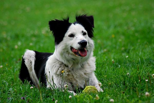 Bra tält? | Hundar iFokus