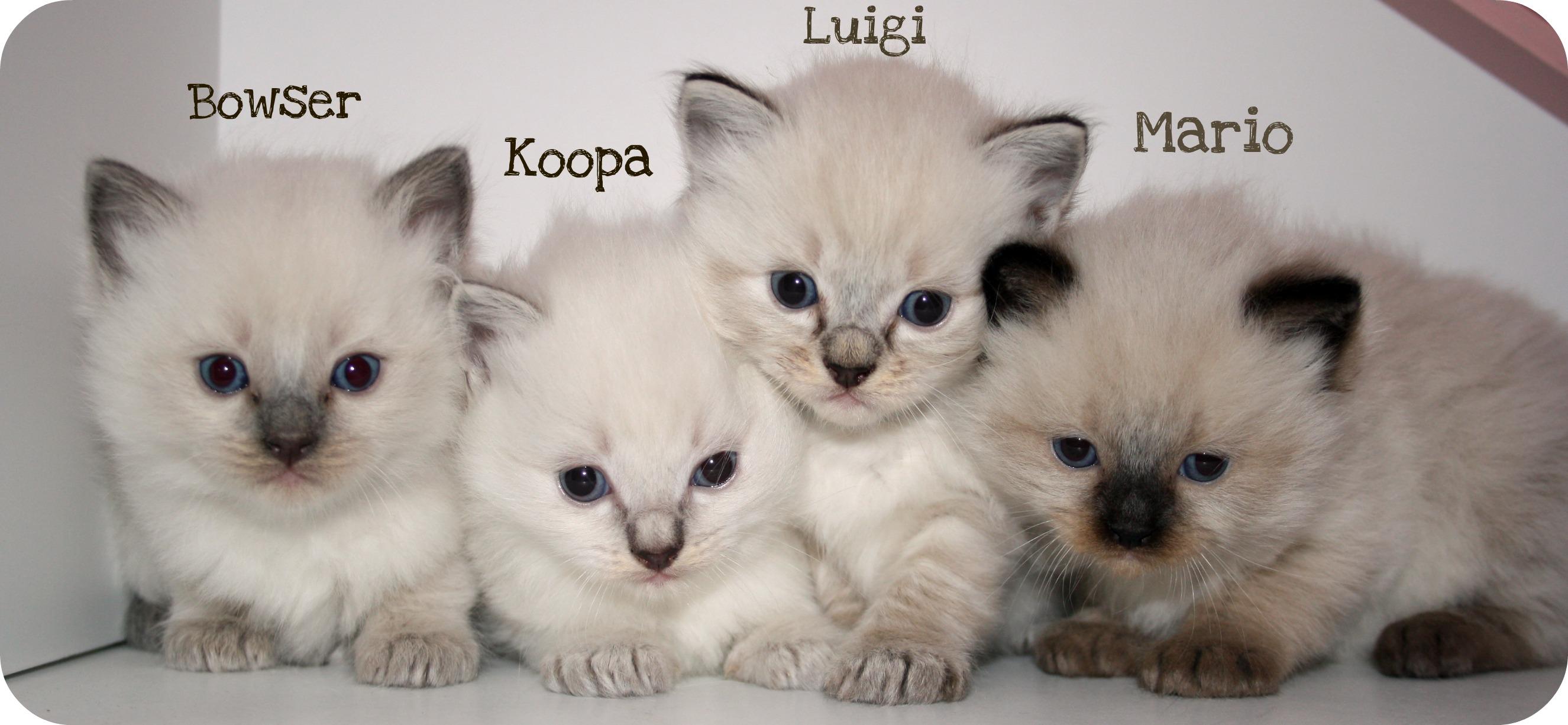 katt ungar
