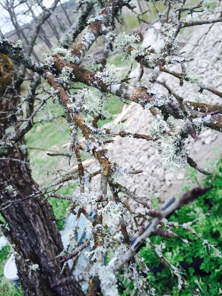 Vad har jag för träd??   prydnadsträd,  buskar och klätterväxter ...