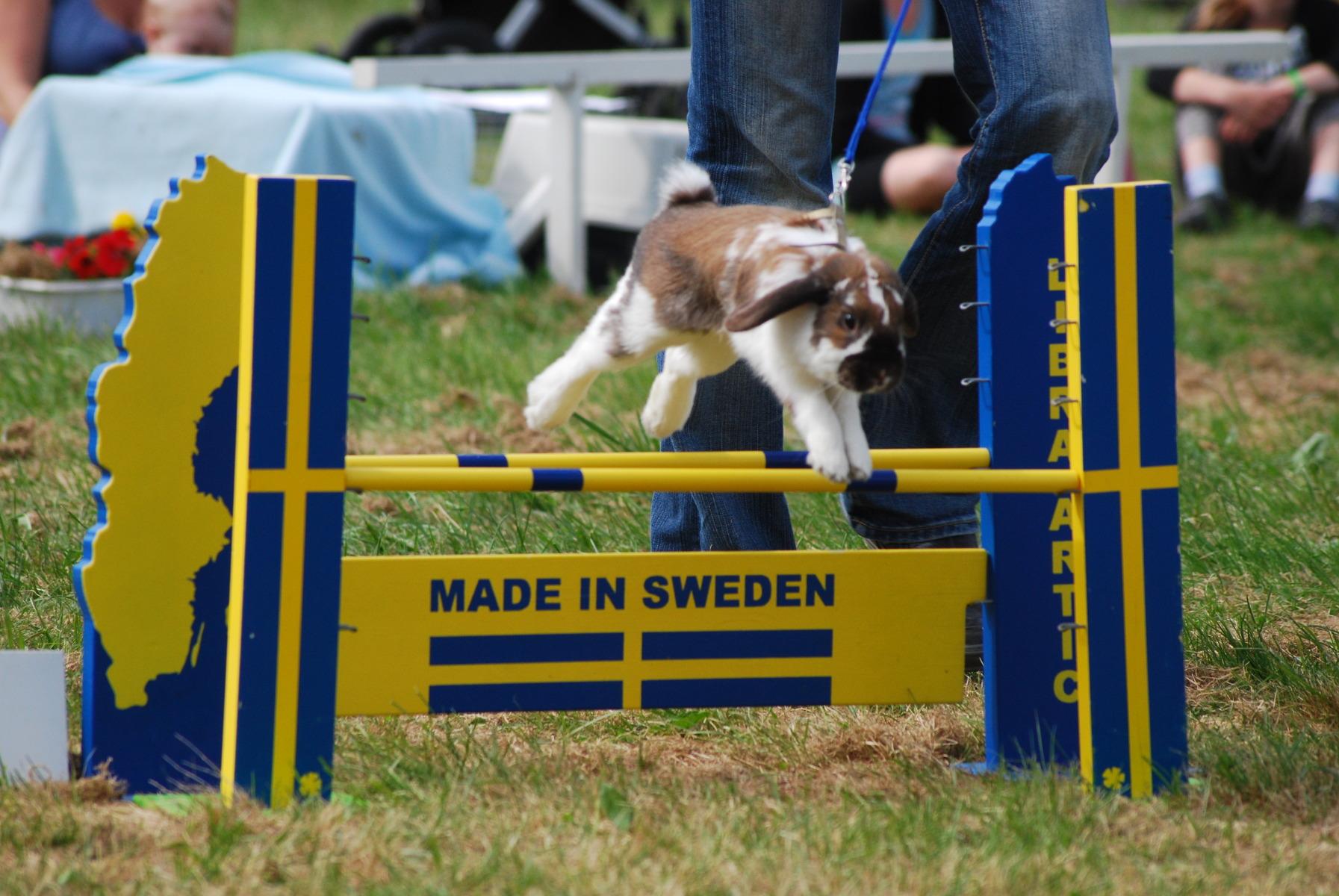 Kaninhoppning Tävling