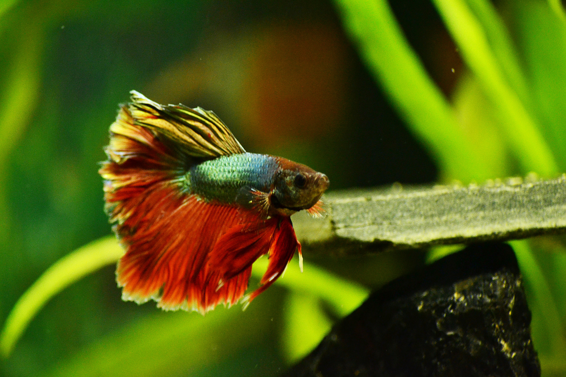 Fisk som ser suddigt raggar daligt