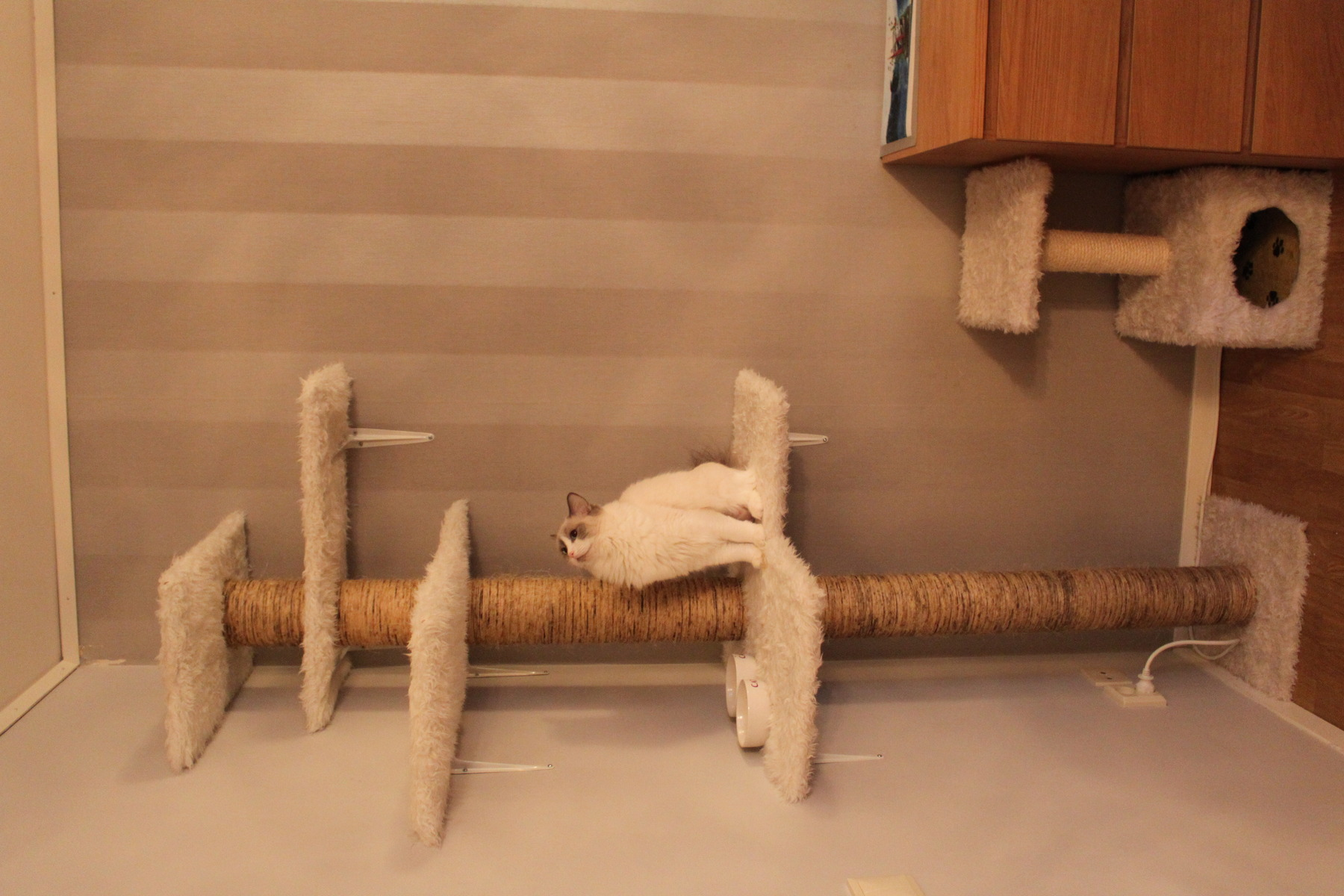 klösträd katt bygga själv