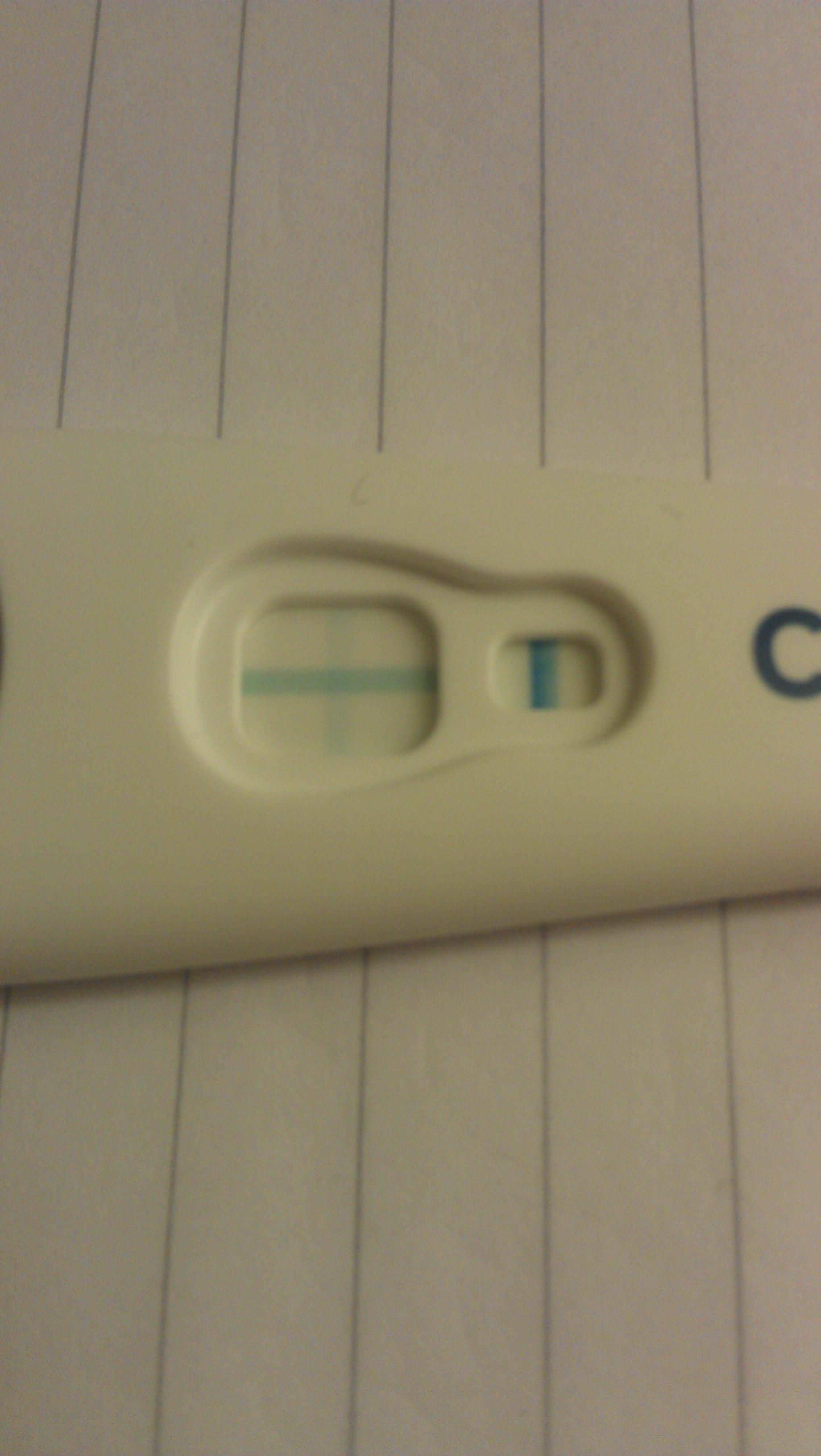 gravid bruna flytningar varje dag