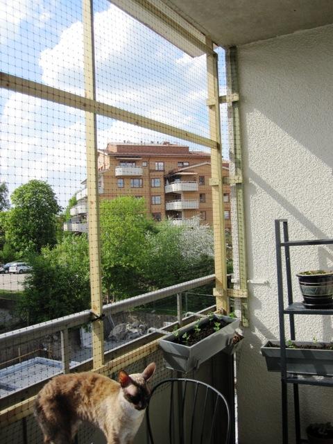 Näta in balkong katt