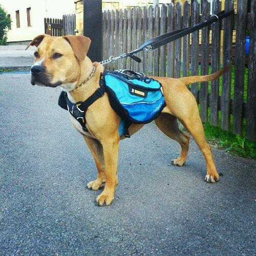 Klövjeväska :) Träning & Inlärning Hundar iFokus