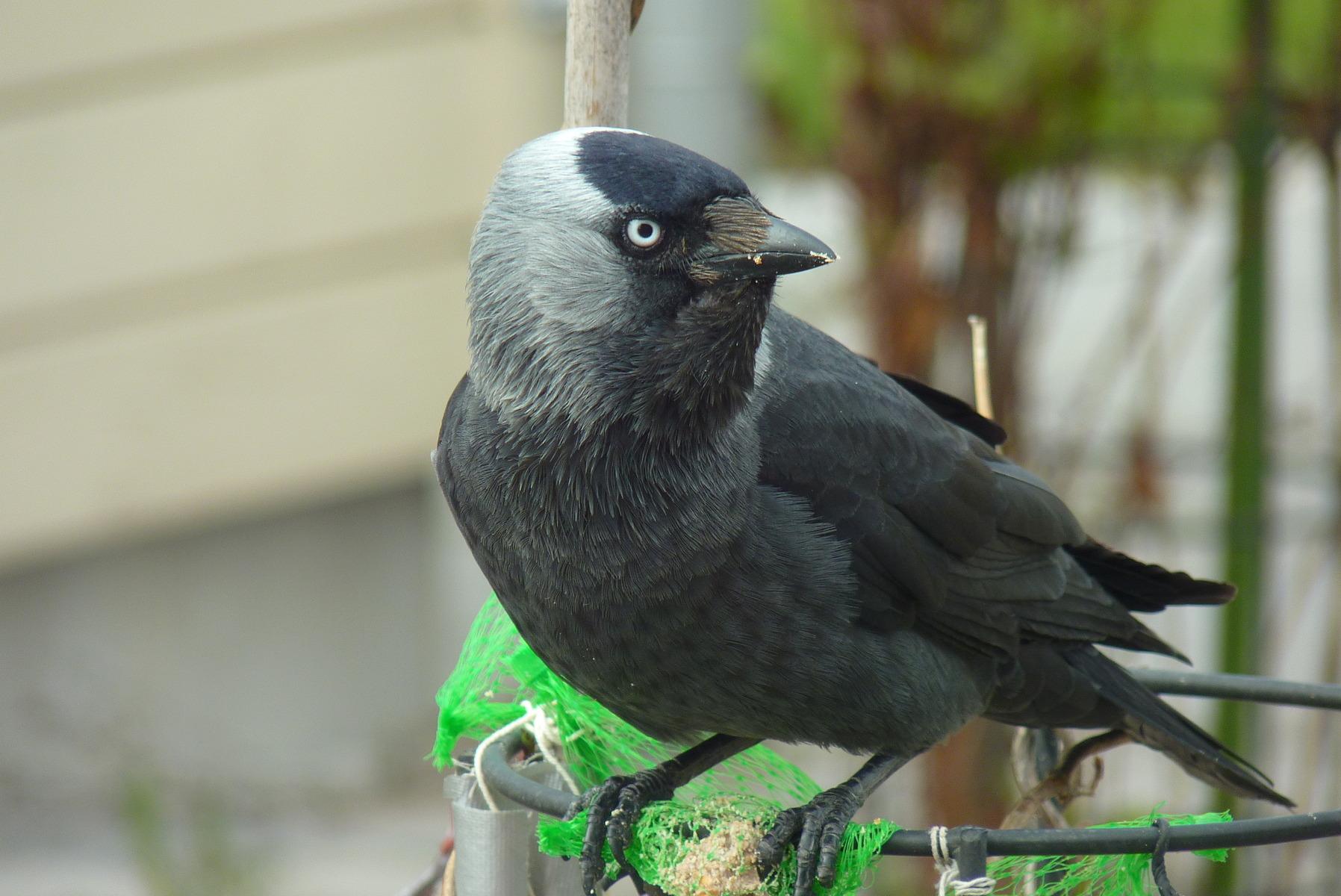 skrämma bort fåglar från altan
