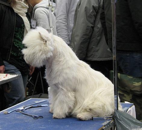 Hur länge får en hund sitta i hundgård