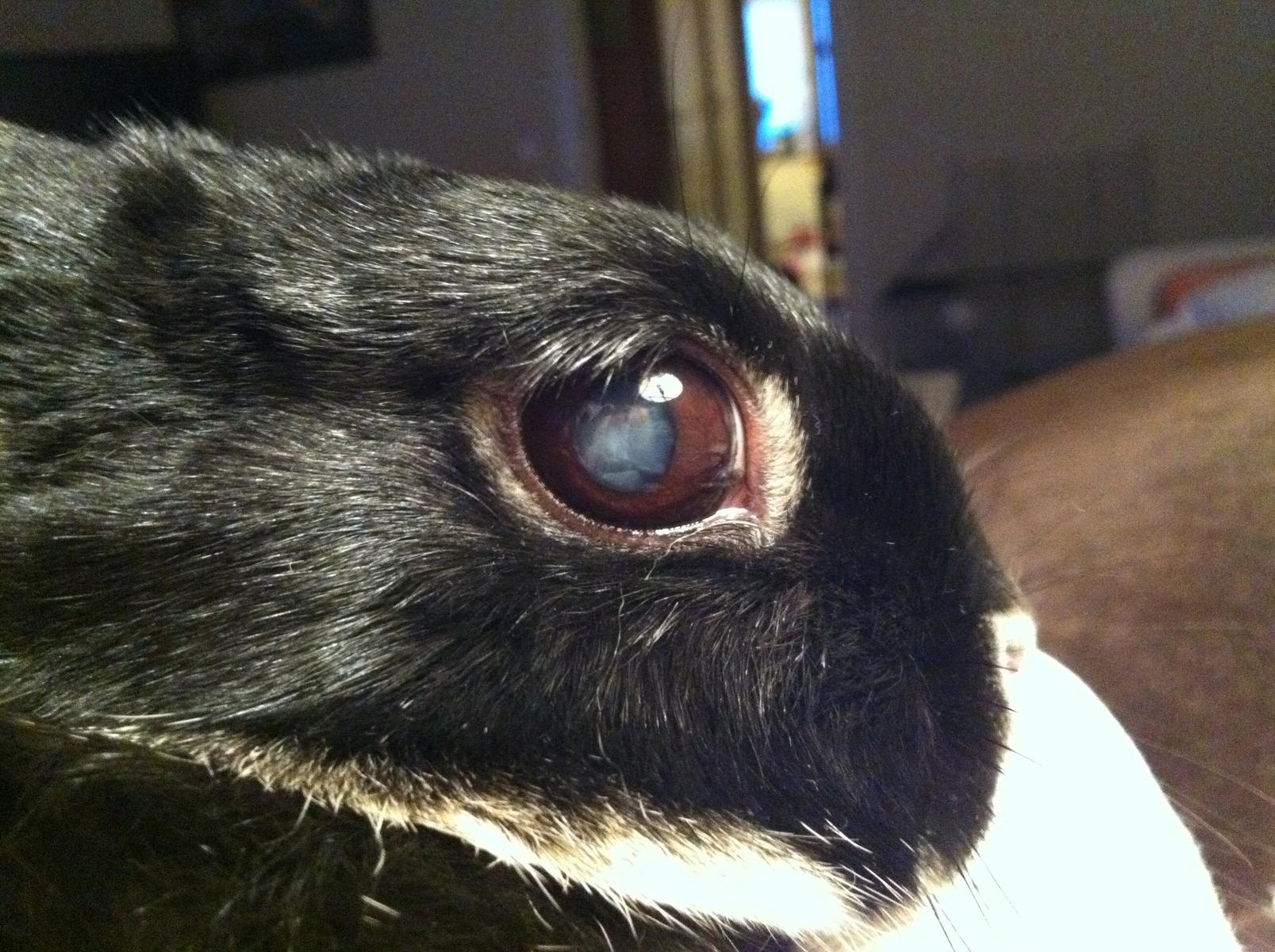 operera ögonen mot grå starr