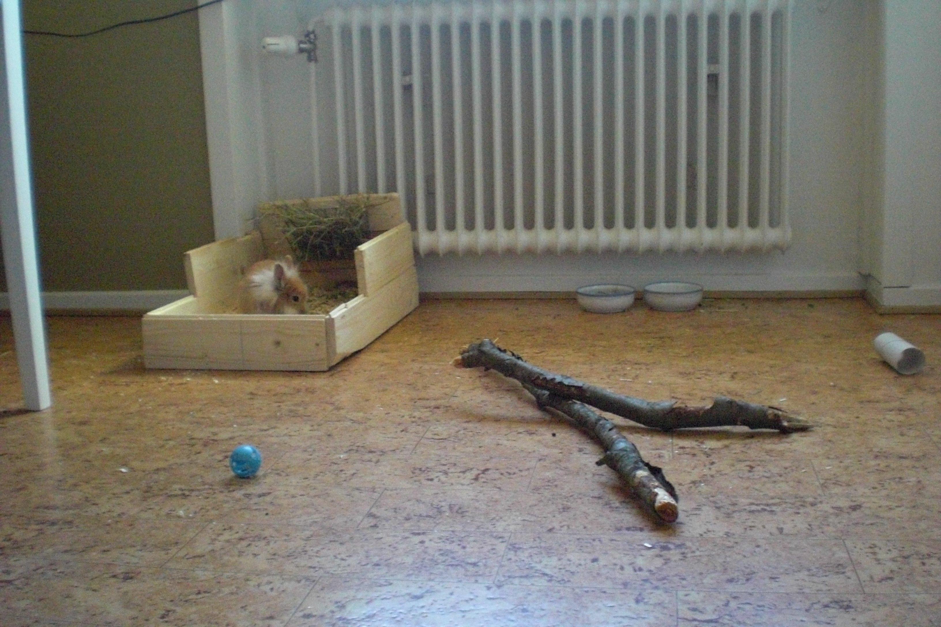 Frigående innekaniner   bur och aktivering   kanin ifokus
