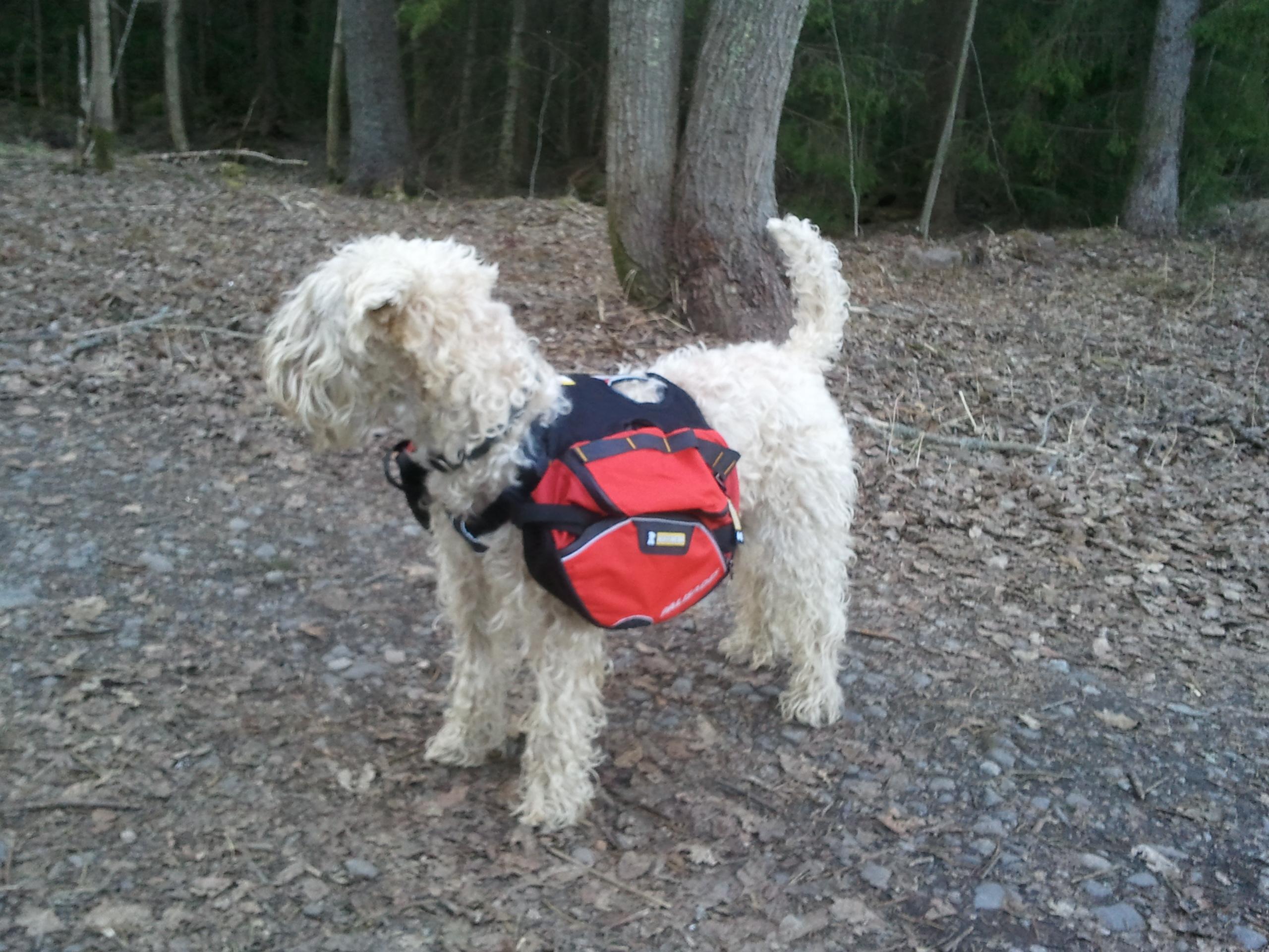 Klövjeväska Aktivering Hundar iFokus