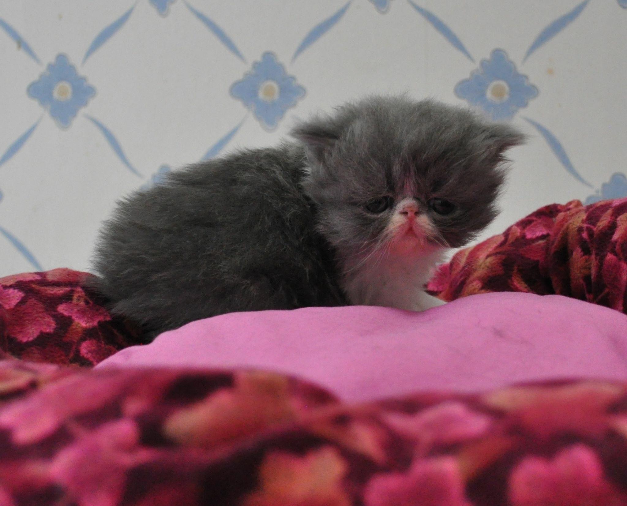 kattungar bortskänkes göteborg