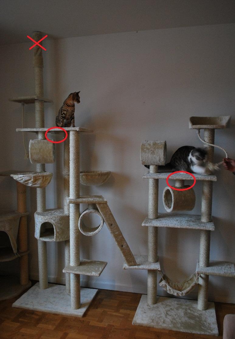 Högt i tak, klösträd   04   tillbehör & utrustning   katter ifokus